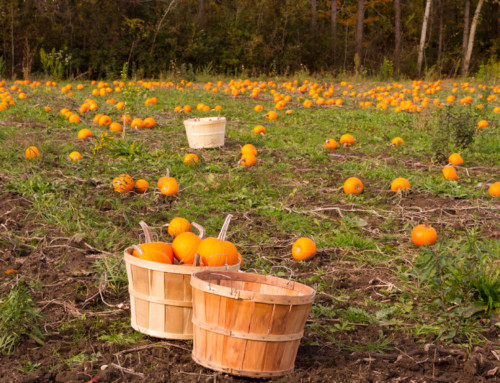 Alliteration Poem | How I Wrote Pumpkin Patch