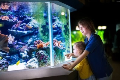 30966067 - happy laughing boy and his adorable toddler sister, cute little curly girl watching fishes in a tropical aquarium with coral reef wild life having fun together on a day trip to a modern city zoo