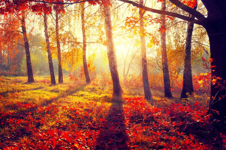 autumn alliteration poem