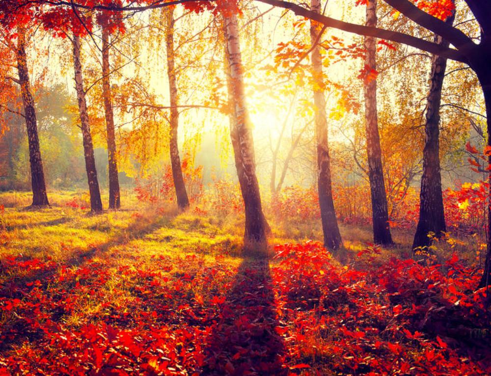 An Autumn Alliteration Poem | 2 Original Alliteration Poems