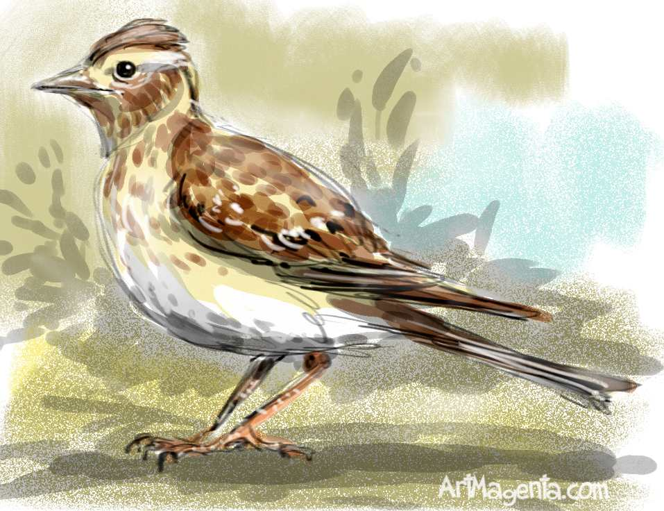 children's spring poems about birds
