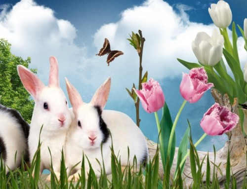 Bunny Poems and Songs | 21 Fun Spring Easter Poems