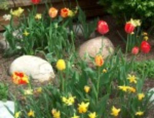 Spring Poems: Rapture by Jane-Ann Heitmueller