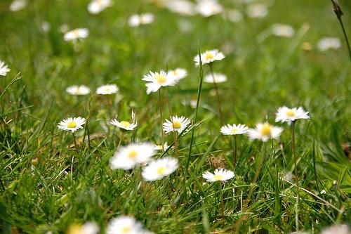 in God's garden funeral poem