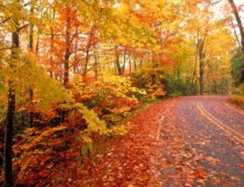 Alliteration Poems: A Fall Alliteration Poem