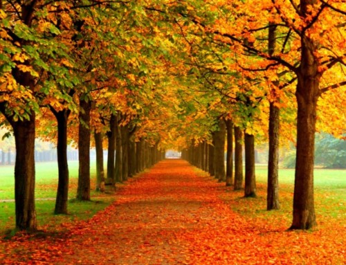 Inspirational Aging Poem | Leaves of Life