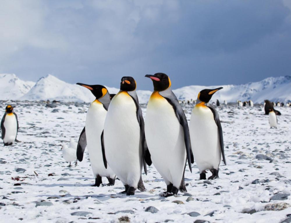 Penguin Poems – Penguin Awareness Day